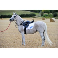 Ascot 5 Point Breastplate