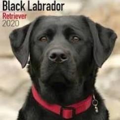 Black Labrador 2020 Calendar