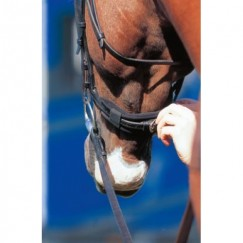 Prolite Noseband Cushion
