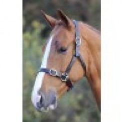 Shires Blenheim Leather Headcollar Havana