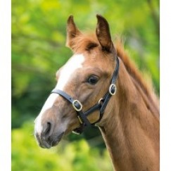 Shires Blenheim Leather  FOAL  Headcollar 373R