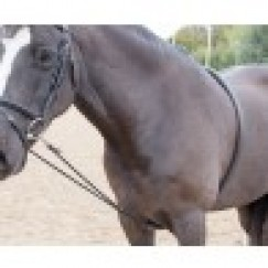 Shires Soft Lunge Aid Code 470 (currently out of stock)